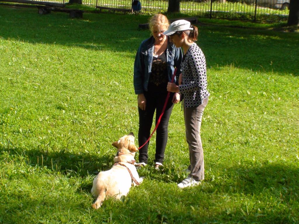 природная терапия. собаки 1