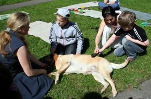 школьный лагерь 2014 - собаки (5)